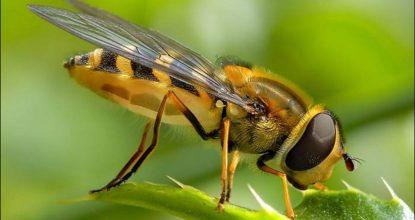arı ilaçlama, arı nasıl ilaçlanır, arı ilaçlama neden yapılır