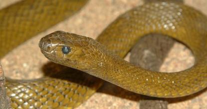 yılan ilaçlaması, yılan nasıl ilaçlanır, yılan ilaçlama işlemi