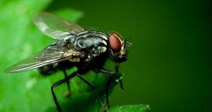 sinek kovma, sinek ilaçlama, sinekleri ortamdan uzaklaştırma
