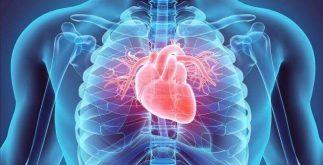 sık görülen hastalıklar, damar hastalıkları, kalp hastalıkları